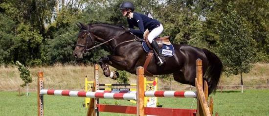 Marlborough Showjumping